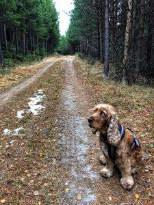 hund på skogstur